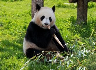 Santuarios animales: Recintos sagrados de la naturaleza