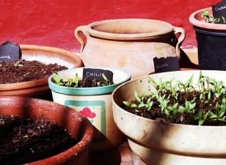 Huerta Aromáticas