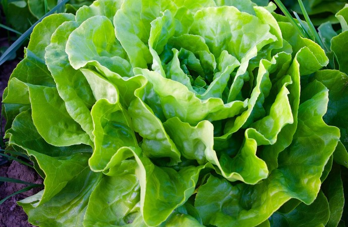 Cultiva plantas comestibles