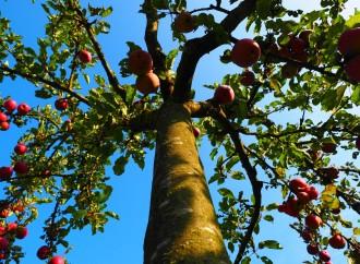 7 maneras ecológicas de comer saludablemente