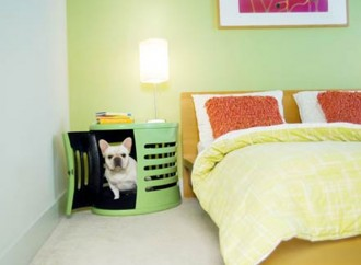 Mascotas en apartamento