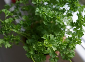 Huerta de hierbas aromáticas
